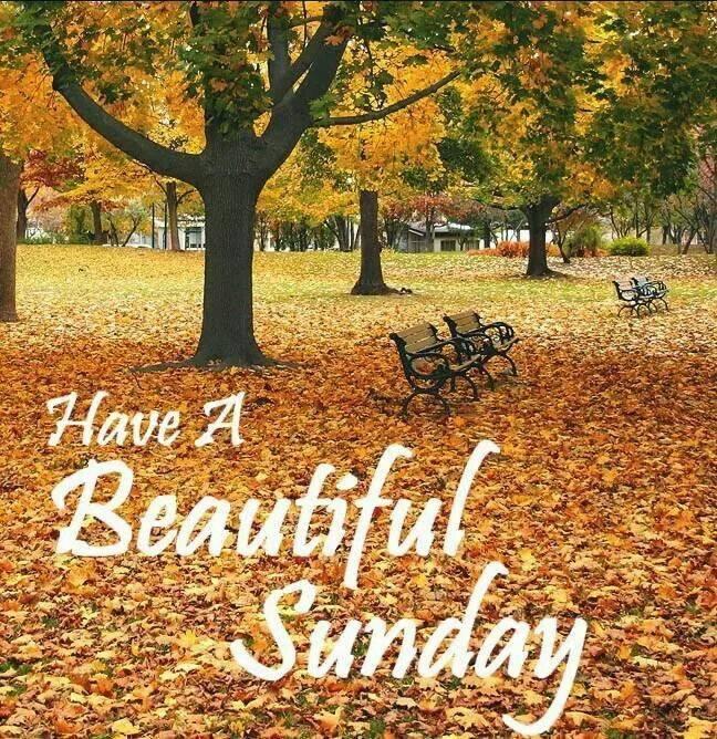 Sunday, November 12